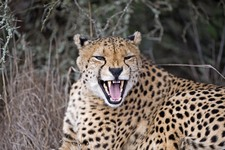 Eastern Cape Safari Greater Addo Accommodation Amakhala Game Lodge Wildlife7 X Ljpeg