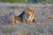 Eastern Cape Safari Greater Addo Accommodation Amakhala Game Lodge Wildlife19 X Ljpeg