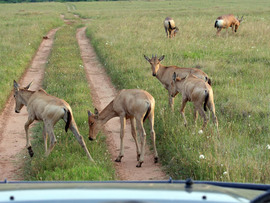 Amakhala Game Reserve Game Drive
