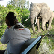 Amakhala Game Reserve Safari Activities