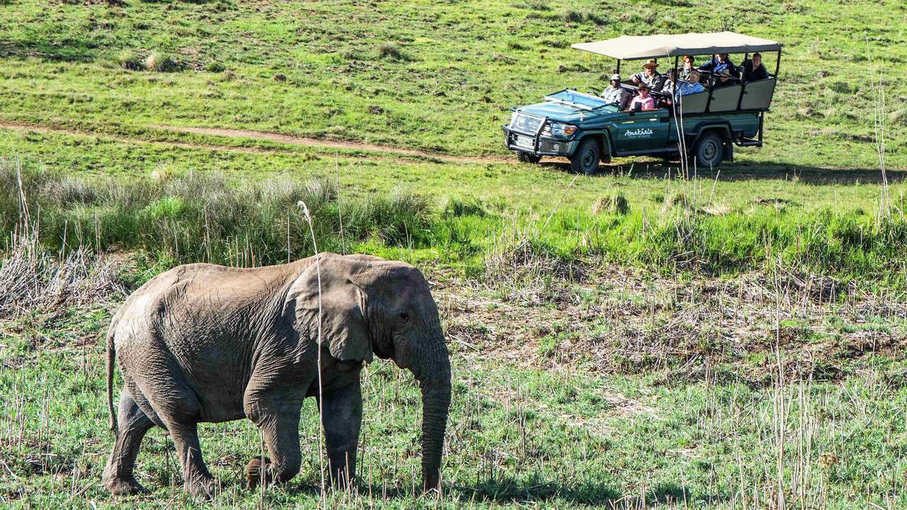 Amakhala Game Reserve Safari Lodge Game Drive