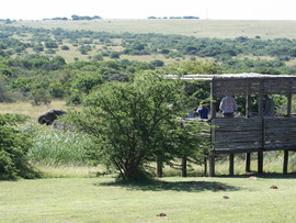 Amakhala Game Reserve Guests Elephant Watering Hole