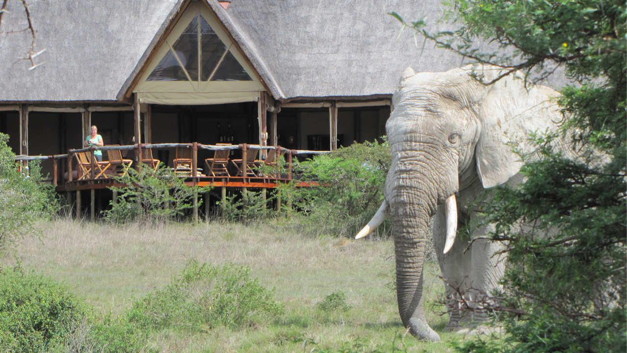 Bush Lodge Amakhala Game Reserve Deck View Elephant