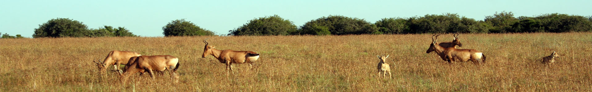 Amakhala Game Reserve Eastern Cape Conservation Wildlife