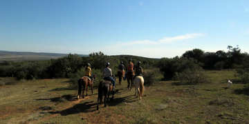 Amakhala Game Reserve Horse Trails Bush