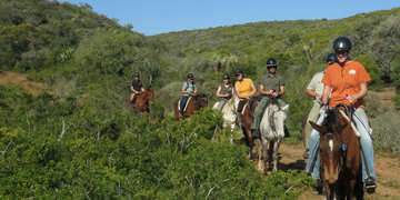 Amakhala Game Reserve Horse Trails Guests Path Guests