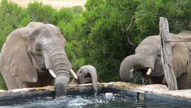 Amakhala Game Reserve Hills Nek Safari Camp Elephants At Pool