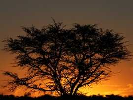Greater Addo Port Elizabeth Accommodation Amakhala Game Reserve