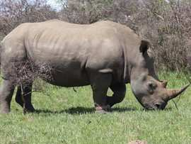 Greater Addo Port Elizabeth Accommodation Amakhala Game Reserve Rhino