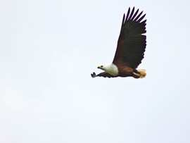 Greater Addo Port Elizabeth Accommodation Amakhala Game Reserve Fish Eagle