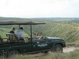 Greater Addo Port Elizabeth Accommodation Amakhala Game Reserve Game Viewing